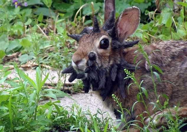 Сексуальные факты кроликов